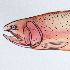 Species Account: Yellowstone CutthroatTrout