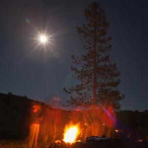 Moonlit night