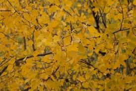 Fall color, September 27, 2013