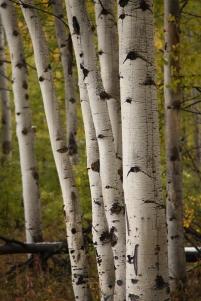 Aspen, September 27, 2013