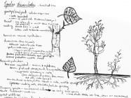 Field notes, September 10, 2013