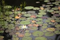 Pond, August 14, 2013