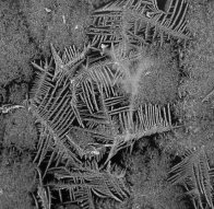 Frost feathers, November 22, 2013