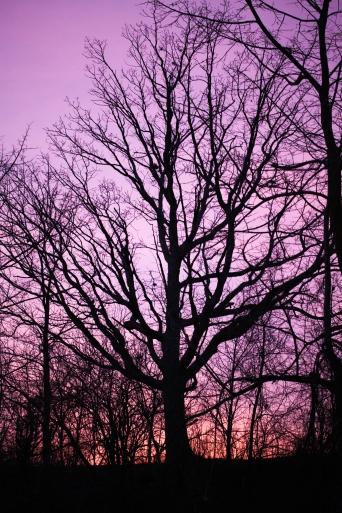 Purple sky, November 30, 2013