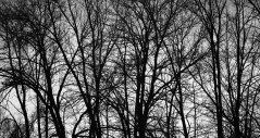 Patterns in the trees, November 30, 2013