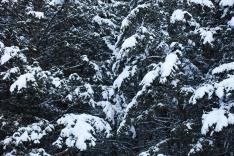 Frosty pillows, December 5, 2013