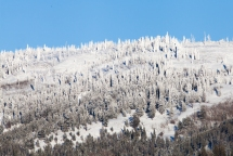 Snow covered trees, October 12, 2013