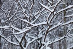 Winter, December 24, 2013