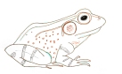 Frog, August 20, 2013