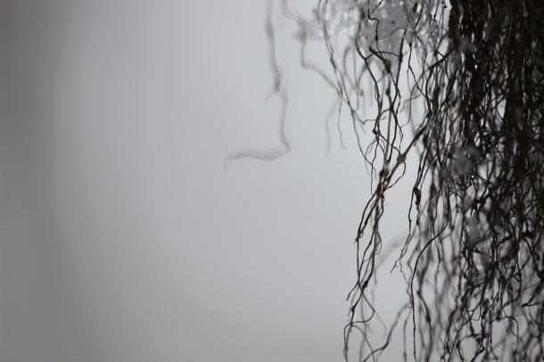 Lichen, January 29, 2014