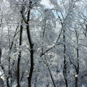 Winter Life: Plants