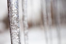 Frozen aspen grove, February 1, 2014