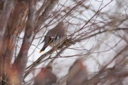 Birds of a feather, February 13, 2014