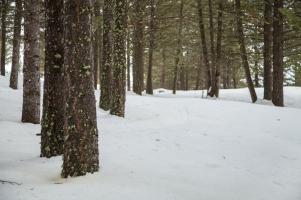 Wet snow, February 15, 2014