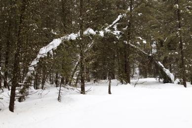 Snow loading, February 15, 2014