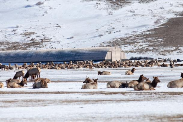Supplemental feed storage, February 26, 2014