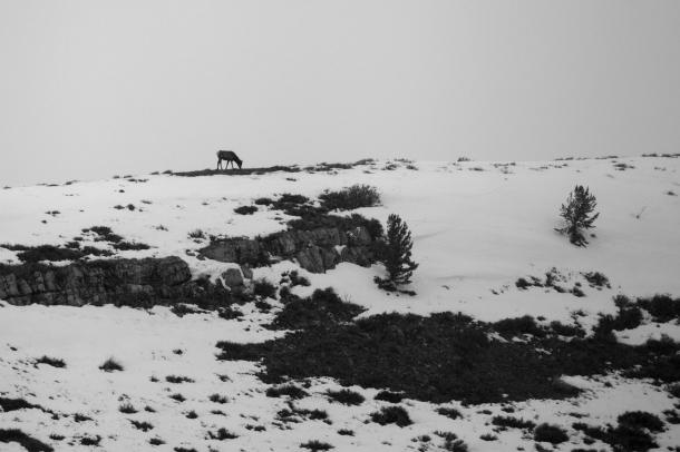 Elk, April 5, 2014