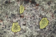 Lichen, May 7, 2014